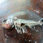 アマゾン川で釣ったピラニアをスープでおいしくいただきました【GIGAZINE連載】