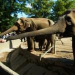 ハンブルクのハーゲンベック動物園ではゾウの鼻に気をつけよう