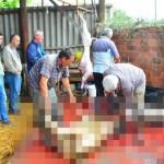 [トルコ・犠牲祭(クルバンバイラム)]動物の肉とスーパーに並ぶ肉は別物ではない