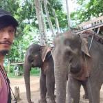 将来が不安なのでラオスで「象使い」の資格を取ってみた