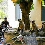 インドでは大学にサルが登校する