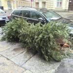 [ドイツの正月]街中に捨てられたクリスマスツリーが門松みたい