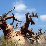 まるで別の惑星!心震えたマダガスカルのバオバブ絶景スポット3つ