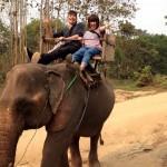 ラオスの「象使い」の国家資格でバイトに受かった話
