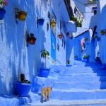 モロッコの青い街「シャウエン」は猫パラダイスだった