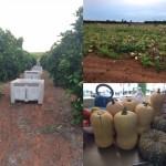 オーストラリアの農園で1ヶ月働くと◯万円稼げることがわかった