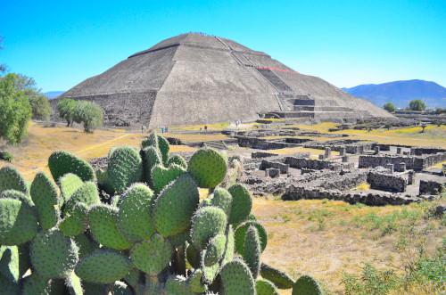 サボテンとピラミッドの写真
