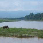 もう動物園には行けないかも…ネパールの世界遺産「チトワン国立公園」で体感した野生動物の楽園っぷり