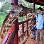困るほどにキリンと触れ合えるケニアのジラフセンターに行ってきた