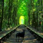ド田舎だけど文句なしの絶景。ウクライナの「愛のトンネル」に行ってきた