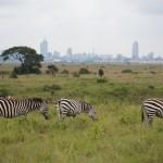 近所の公園かw ケニアのサファリがドライブスルー感覚(ナイロビ国立公園)