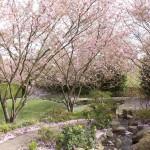 ドイツの日本庭園のレベルが高い…!ベルリンの「世界の庭園」に行ってきた