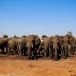 ゾウの群れが音をたてて攻めてくるボツワナの宿「Elephant Sands」の泊まり方