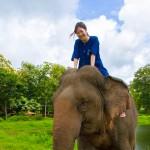 タイで唯一の国立ゾウ園で象使いコースを3日間受講してきた @TECC