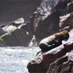 1500円で行けるペルーのガラパゴス「バジェスタ島」が侮れない