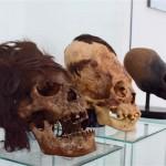 宇宙人説の絶えない「パラカスの頭蓋骨」の実物を見に行ってきた