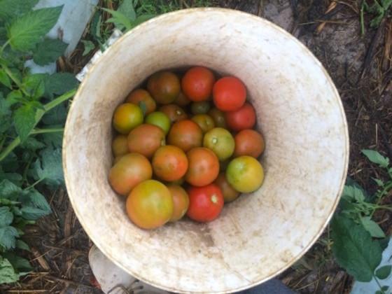 tomatoncu928buv3vr