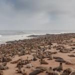 【ナミビア・ケープクロス】世界最大級のオットセイの群れを見て学んだこと
