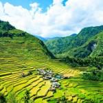 これが世界遺産の田んぼ…!フィリピン・バナウェの棚田をゆく