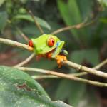 カエル推しなコスタリカでは無名のカエル園こそ目玉だという話